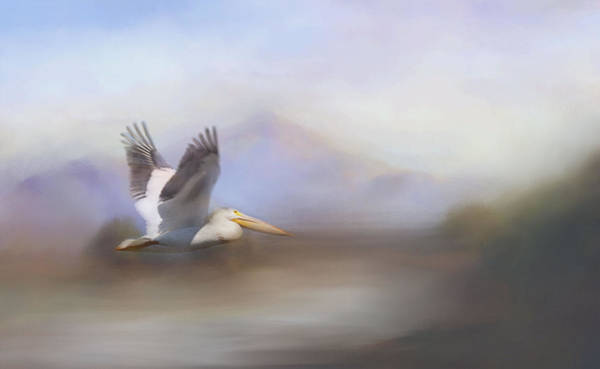 Photograph - Pelican In Flight  by Betty  Pauwels