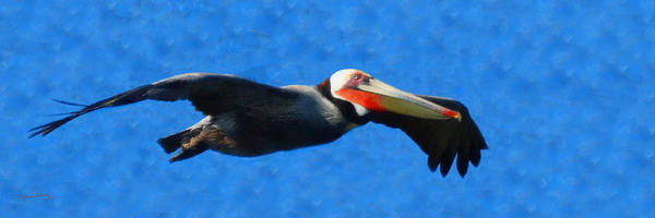Shore Bird Digital Art - Pelican In Flight Panoramic by Ernie Echols