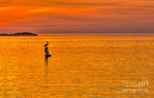 Pelicans Photograph - Pelican On A Buoy by Marvin Spates