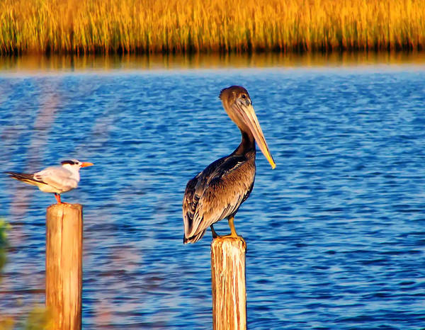 Pelican On A Pole Art Print