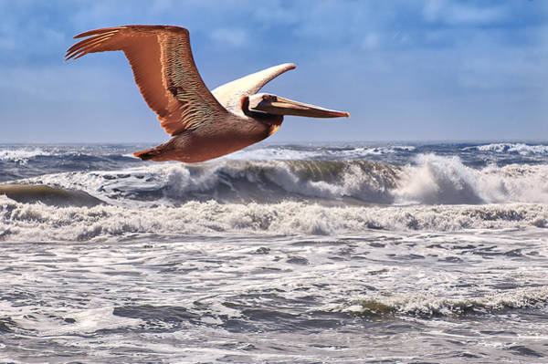 Photograph - Pelican Over The Atlantic by Mary Almond