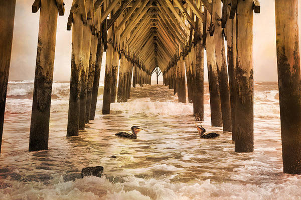 Underneath Photograph - Pelican Paradise by Betsy Knapp