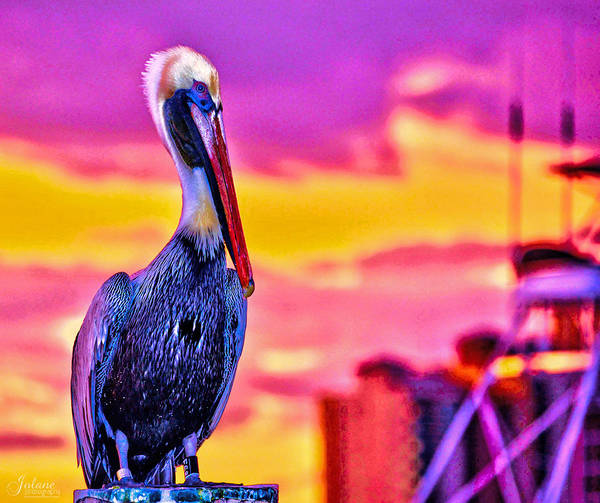 Photograph - Pelican Pete by Jody Lane