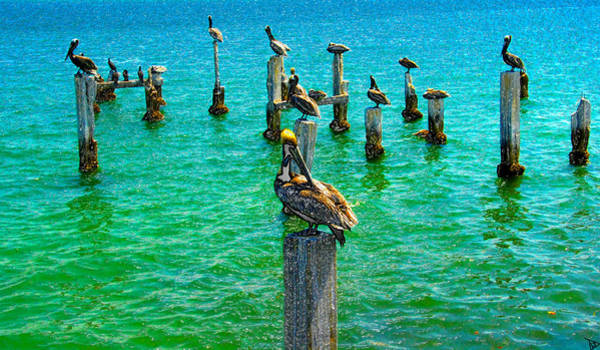 Roost Painting - Pelican Pier by David Lee Thompson