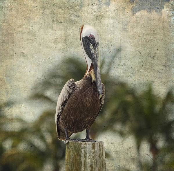 Brown Pelicans Wall Art - Photograph - Pelican - Sitting Around by Kim Hojnacki