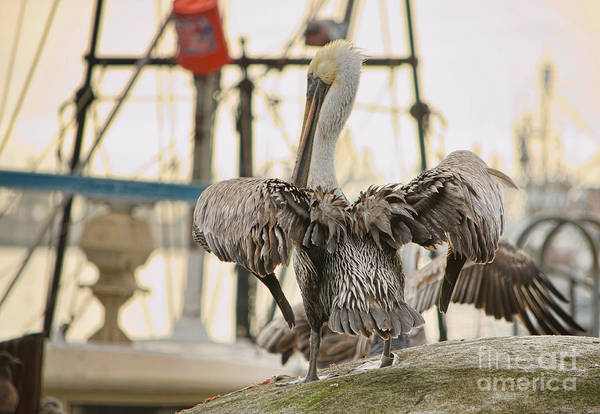 Photograph - Pelican Strut by Donna Greene