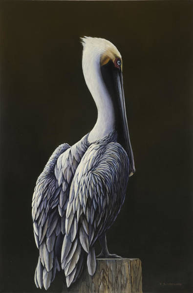 Water Foul Painting - Pelican by Troy Bjorklund