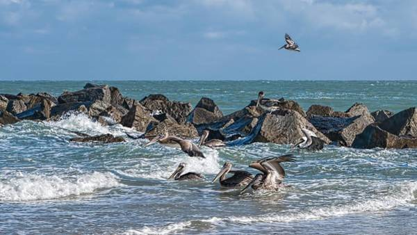 Photograph - Pelicans 904 by Rudy Umans