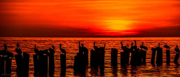Photograph - Pelicans At Sunset In Red And Yellow by Julis Simo