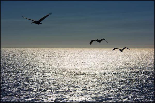 Photograph - Pelicans In Flight by Erika Fawcett