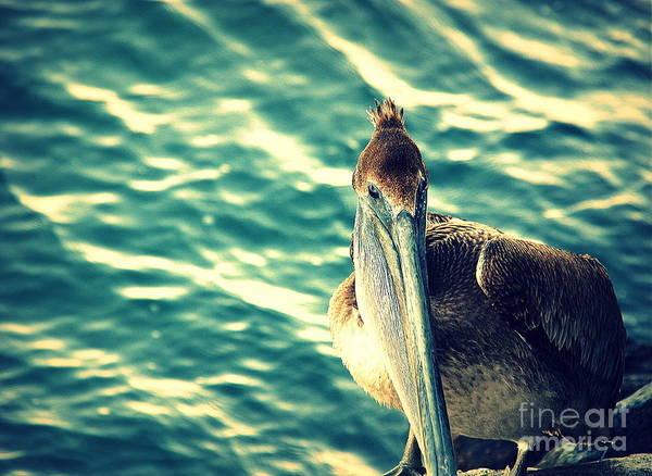 Photograph - Pelicans New Hair Do by Susanne Van Hulst