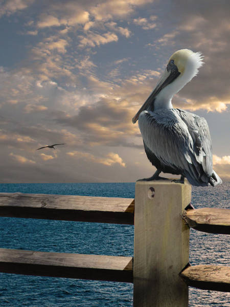 Wall Art - Digital Art - Pelicans Of Tampa Bay by M Spadecaller