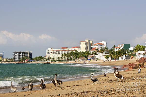 Photograph - Pelicans On Beach In Puerto Vallarta by Elena Elisseeva