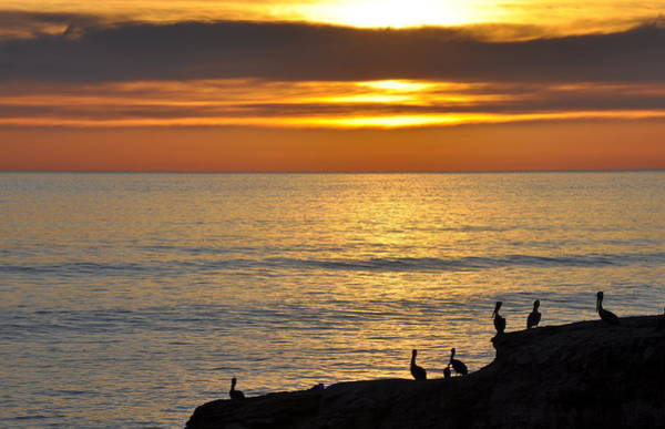 Photograph - Pelicans Sunset View by AJ  Schibig