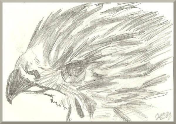 Drawing - Pencil Drawing Of Hawk Eye by Marissa McAlister
