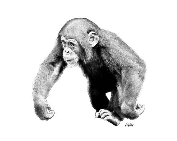 Digital Art - Pencil Sketch by Larry Linton