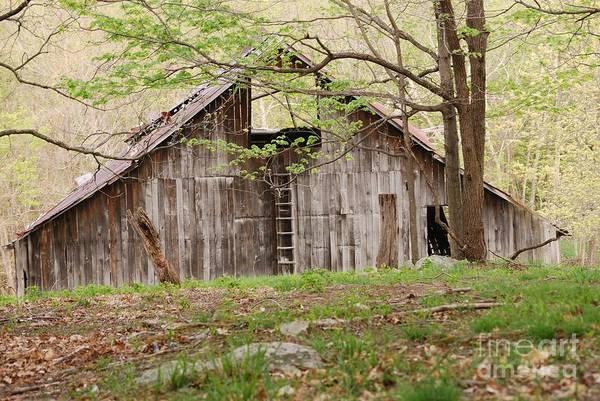 Photograph - Pendleton County Barn by Randy Bodkins