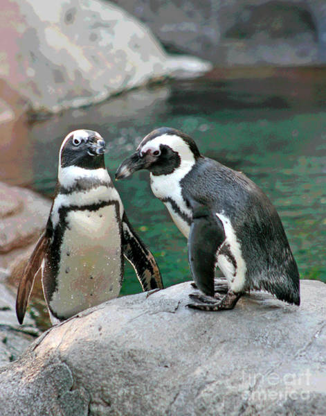 Photograph - Penguin Buddies by Larry Oskin
