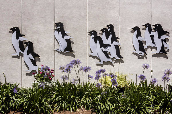 Digital Art - Penguin Flight by Photographic Art by Russel Ray Photos
