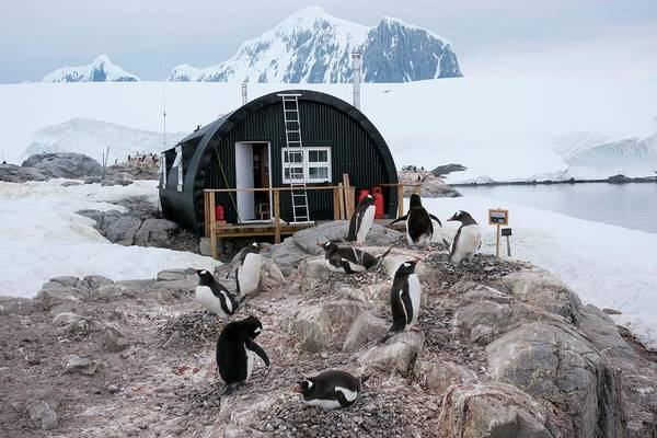 Gentoo Wall Art - Photograph - Penguins At Port Lockroy by Peter Menzel