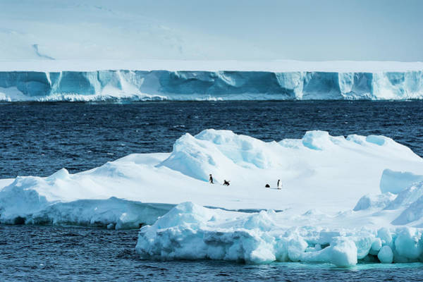 Wall Art - Photograph - Penguins On An Iceberg  Antarctica by Deb Garside