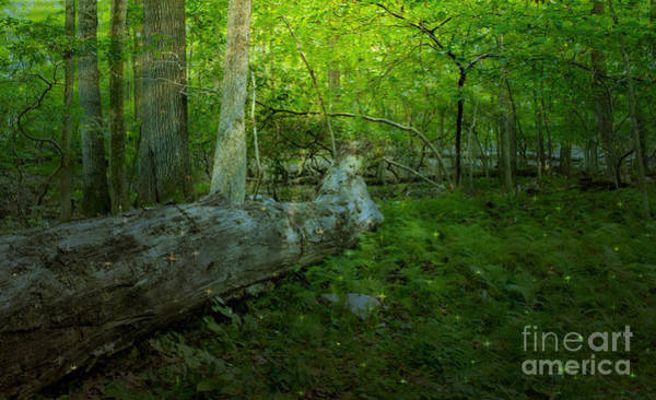 Photograph - Penn's Woodland by Rima Biswas