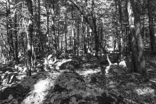 Photograph - Pennsylvania Forests Lan 347 by G L Sarti