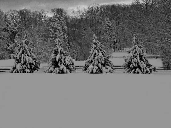 Photograph - Pennsylvania Snowy Wonderland Bw by David Dehner