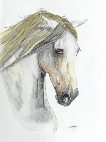 Equine Drawing - Pensador by Janina  Suuronen