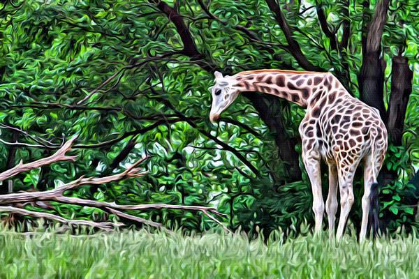 Photograph - Pensive Giraffe by Alice Gipson