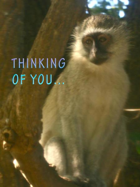 Photograph - Pensive Monkey  by Karen Zuk Rosenblatt