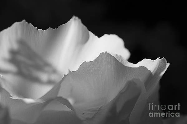 Photograph - Peony Edges by Terry Rowe