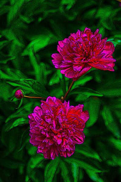 Photograph - Peony - Flower Spite by Dragan Kudjerski