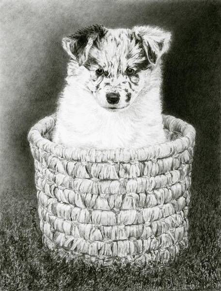 Drawing - Pepper by Ann Ranlett