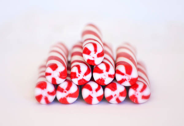 Photograph - Peppermint Twist - Candy Canes by Kim Hojnacki