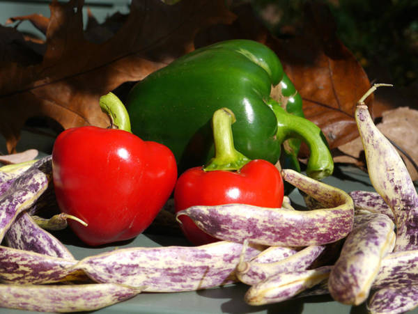Photograph - Peppers And Beans by Richard Reeve
