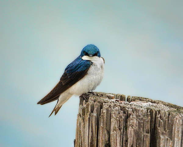 Photograph - Perched And Waiting by Jai Johnson