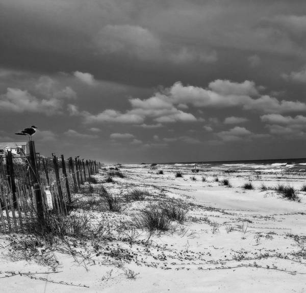 Wall Art - Photograph - Perched At St. George Island by Toni Hopper