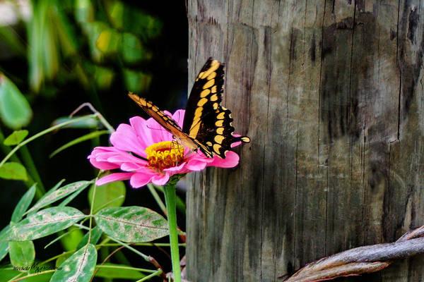 Wall Art - Photograph - Perched On A Flower by Mechala Matthews