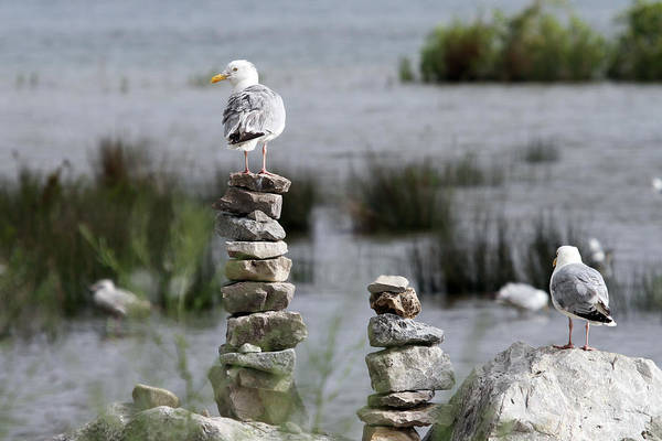 Perched On A Rock Cairn Art Print