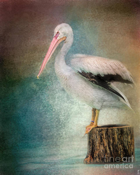 Photograph - Perched Pelican by Jai Johnson