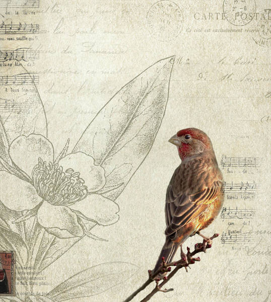 Finch Photograph - Perched by Rebecca Cozart