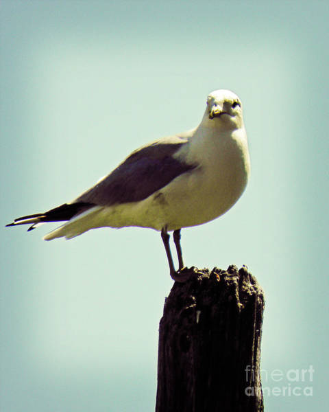 Wall Art - Photograph - Perching Seagull by Emily Kelley