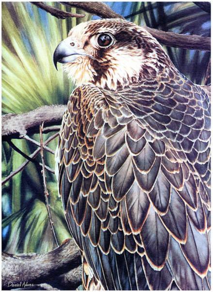 Painting - Da138 Peregrine Falcon By Daniel Adams by Daniel Adams