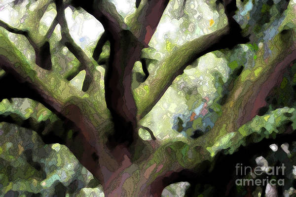 Photograph - Perfect Climbing Tree  by Carol Groenen