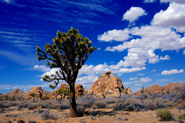 Photograph - Perfect Day In Joshua Tree by Tranquil Light  Photography