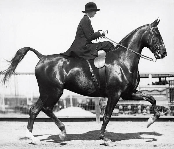 1910 Photograph - Perfect Equine Form by Underwood Archives
