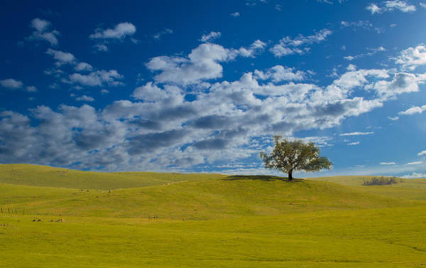 Photograph - Perfect Landscape by Rima Biswas