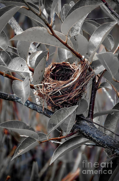 Empty Nest Wall Art - Photograph - Perfect Little Home by Joshua Roberts
