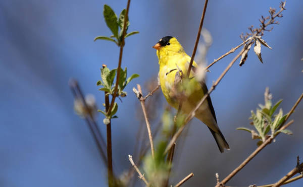 Photograph - Perfect Shade Of Yellow by Lori Tambakis